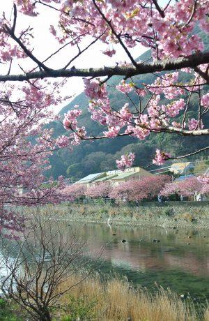 Nhật Bản, Kansai – Kyoto – Osaga – Kobe – Nara – Freeday(4ngày 4đêm)