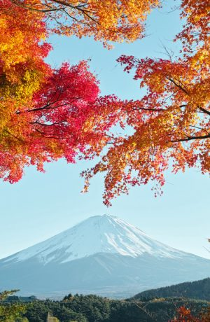 RỰC RỠ SẮC THU NHẬT BẢN TOKYO – YAMANASHI – FUJI (4N3D)